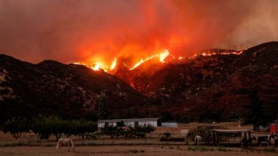 Photo of Apple Fire' expand to 20,000 acres land; 8,000 people have left homes to a safer place